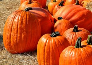 Top Fall Festivals in the Springfield, MO Region